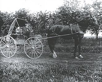 Charles Boarman Harris - Dr. Charles B. Harris driving a horse and buggy in the Pembina countryside.