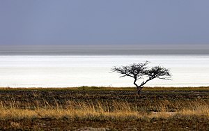 Etosha pan - Looking across the savannah to the hot, dry, salt-encrusted Etosha pan