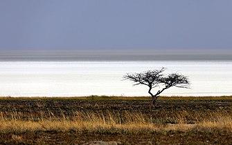 Dry Etosha Pan.jpg