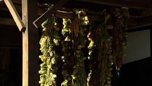 Siraegi - Image: Drying siraegi