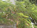Drzewko w Tule.JPG