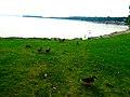 Ducks at Warner Beach - panoramio.jpg