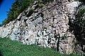 Dunham Dolomite (Lower Cambrian; Route 2 roadcut, southeast of the Lamoille River bridge, Vermont, USA) 14.jpg