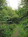 Dunskey Glen, near Portpatrick - geograph.org.uk - 14843.jpg