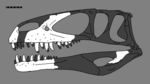 Duriavenator reconstructed skull.png