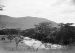 ETH-BIB-Bachvegetation am Makungu-River-Kilimanjaroflug 1929-30-LBS MH02-07-0451.tif
