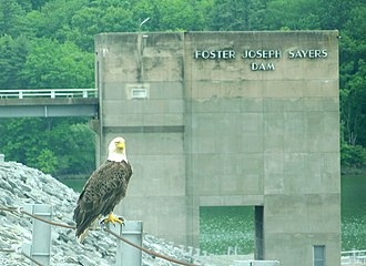 Bald Eagle State Park - Eagle nesting near Foster Joseph Sayers Dam