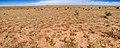 East of the Hueco Mountains - Flickr - aspidoscelis (1).jpg