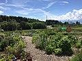 Ecole-hoteliere-de-Lausanne Vegetable Garden.jpg