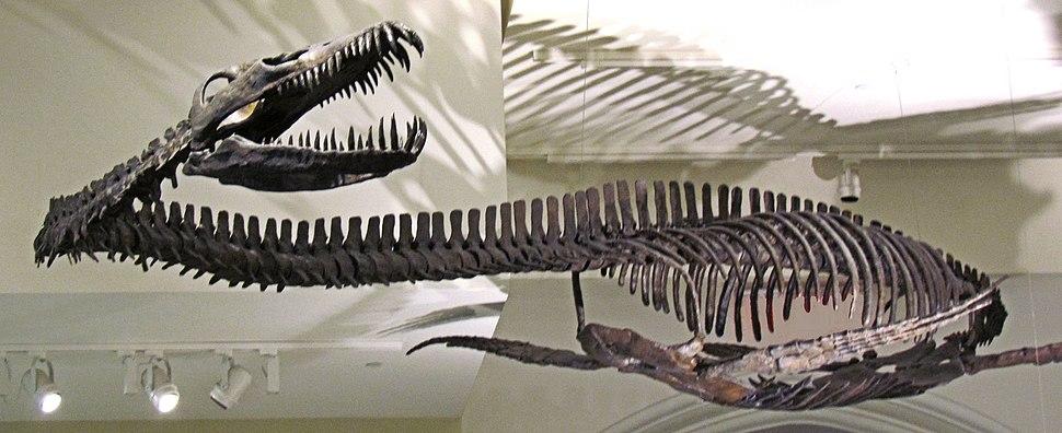 Elasmosaur