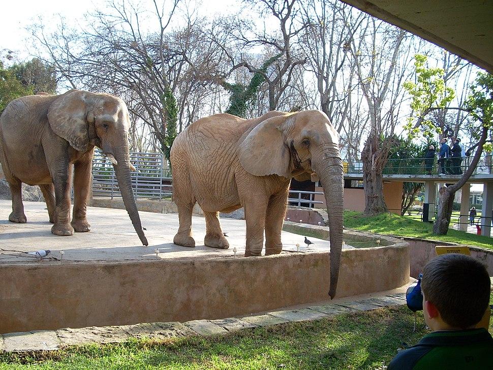 Elefantes 4