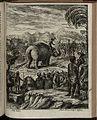 Elephantographia Curiosa 315.jpg