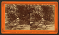 Entrance to St. Augustine, through an archway of Pride of India and Live Oak trees, from Robert N. Dennis collection of stereoscopic views 5.png