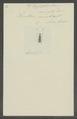 Eupsalis - Print - Iconographia Zoologica - Special Collections University of Amsterdam - UBAINV0274 031 02 0006.tif