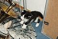Eurasburg, Bayern, Kater Tobi als Kätzchen, 1999.jpg