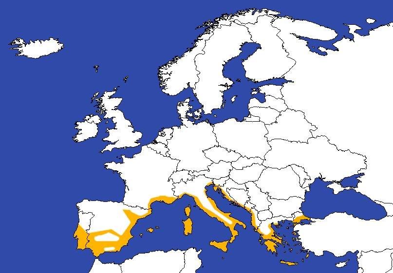 Europe-sud-olive