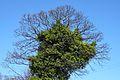 Evergreen (3398888405).jpg