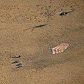 Expedition 60 Soyuz MS-12 Landing (NHQ201910030012).jpg