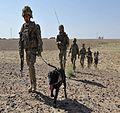 Explosive Detection Dog (EDD).jpg