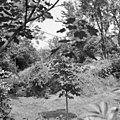 Exterieur RESTANTEN VAN DE MOLEN - Schoonhoven - 20299520 - RCE.jpg