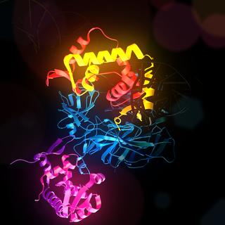 FOXP3 mammalian protein found in Homo sapiens