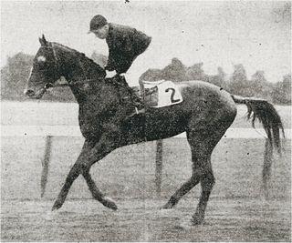 Fair Play (horse) American-bred Thoroughbred racehorse