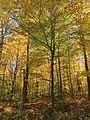 Fall Canopy.jpg