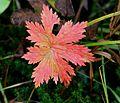 Fall colors along the trail (4141873408).jpg