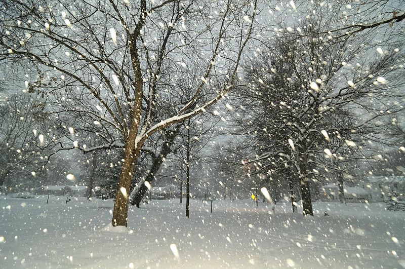 File:Falling Snow - stuck at home (3234280718).jpg