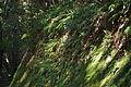 Ferns (22454870268).jpg