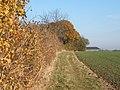 Field edge path towards Newton Barn - geograph.org.uk - 614091.jpg