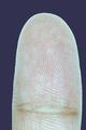 Finger tip.png
