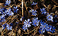 First Flowers of Spring.jpg