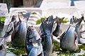 Fish at Mercato Pignasecca (4122802618).jpg