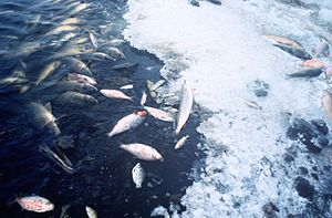 Fish kill - There are many causes of fish kill, but oxygen depletion is the most common cause.