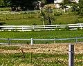 Five Fences (28305455224).jpg