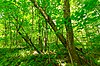Flambeau River Hardwood Forest.jpg