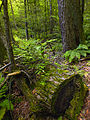 Flickr - Nicholas T - Nurse Log.jpg