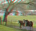 Flickr - jimf0390 - JimF 04-13-10-0013a horses.jpg