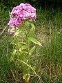 Flower006.jpg