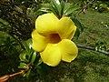 Flower - panoramio - georama (1).jpg