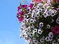 Flower Arrangement - London - England - 01 (27776671073).jpg