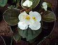 Flowers - Uncategorised Garden plants 63.JPG