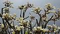 Flowers vs Grey Sky (31438702901).jpg