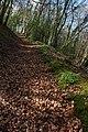 Footpath climbing Howle Hill - geograph.org.uk - 745403.jpg