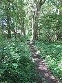 Footpath through Trench Shaw, Tonbridge - geograph.org.uk - 1402238.jpg