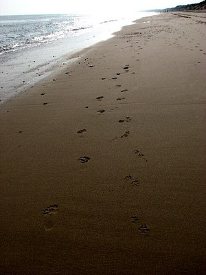 English: Footprints in the wet sand