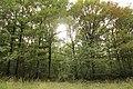 Forêt Départementale de Méridon à Chevreuse le 29 septembre 2017 - 53.jpg