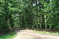 Forêt domaniale de Bois-d'Arcy 38.jpg