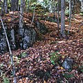 Forest Floor in the Fall.jpg
